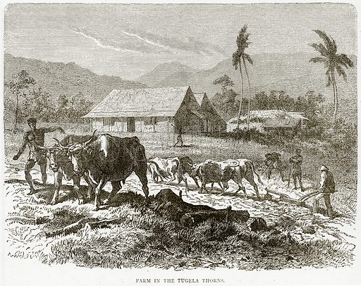 Farm in the Tugela Thorns. Illustration from Illustrated Travels edited by HW Bates (Cassell, c 1880).