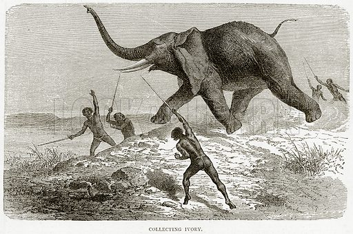 Collecting Ivory. Illustration from Illustrated Travels edited by HW Bates (Cassell, c 1880).