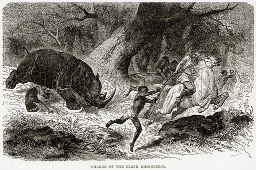 Charge of the Black Rhinoceros. Illustration from Illustrated Travels edited by HW Bates (Cassell, c 1880).