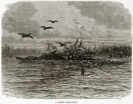 A Laden Alligator. Illustration from Illustrated Travels edited by HW Bates (Cassell, c 1880).