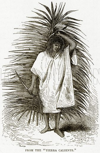 """From the """"Tierra Caliente."""" Illustration from Illustrated Travels edited by HW Bates (Cassell, c 1880)."""