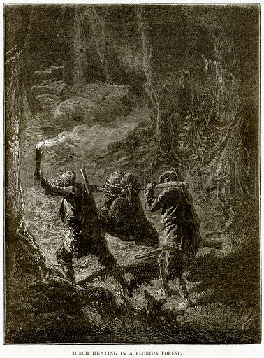 Torch hunting in a Florida Forest. Illustration from Illustrated Travels edited by HW Bates (Cassell, c 1880).