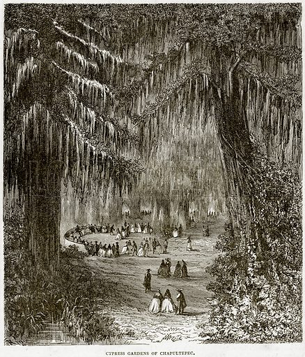 Cypress Gardens of Chapultepec. Illustration from Illustrated Travels edited by HW Bates (Cassell, c 1880).