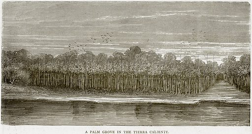 A Palm Grove in the Tierra Caliente. Illustration from Illustrated Travels edited by HW Bates (Cassell, c 1880).