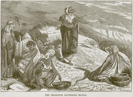 The Israelites gathering Manna. Illustration from The Child's Bible (Cassell, c 1880).