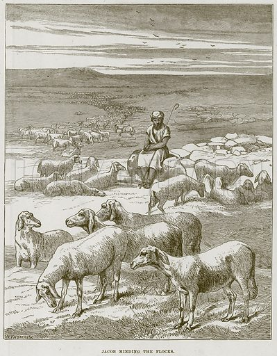Jacob minding the Flocks. Illustration from The Child's Bible (Cassell, c 1880).