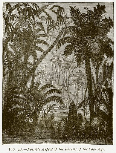 Possible Aspect of the Forests of the Coal Age. Illustration from Discoveries and Inventions by Robert Routledge (9th edn, George Routledge, 1891).