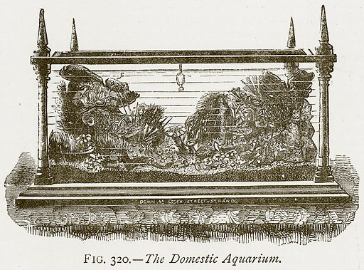 The Domestic Aquarium. Illustration from Discoveries and Inventions by Robert Routledge (9th edn, George Routledge, 1891).