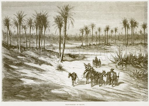 Palm-Forest of Elche. Illustration from Spanish Pictures (Religious Tract Society, c 1875).