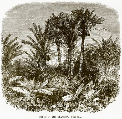 Palms in the Alameda, Cordova. Illustration from Spanish Pictures (Religious Tract Society, c 1875).