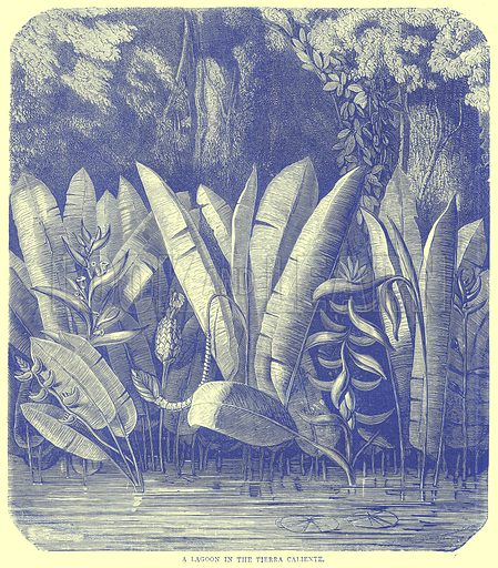A Lagoon in the Tierra Caliente. Illustration from Illustrated Travels edited by H W Bates (Cassell, c 1880).