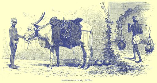 Baggage-Animal, India. Illustration from Illustrated Travels edited by H W Bates (Cassell, c 1880).