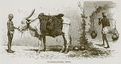 Baggage-Animal, India. Illustration from Illustrated Travels edited by HW Bates (Cassell, c 1880).