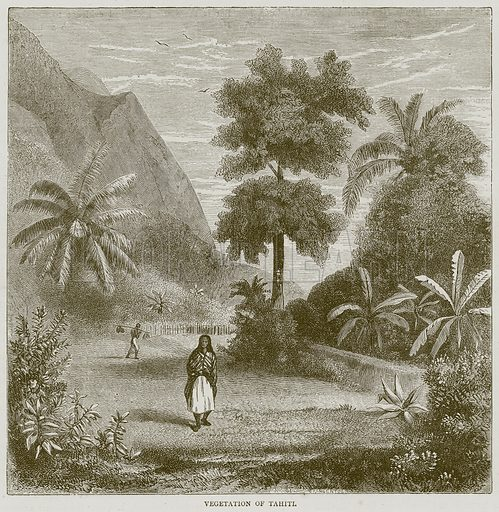 Vegetation of Tahiti. Illustration from Illustrated Travels edited by H W Bates (Cassell, c 1880).