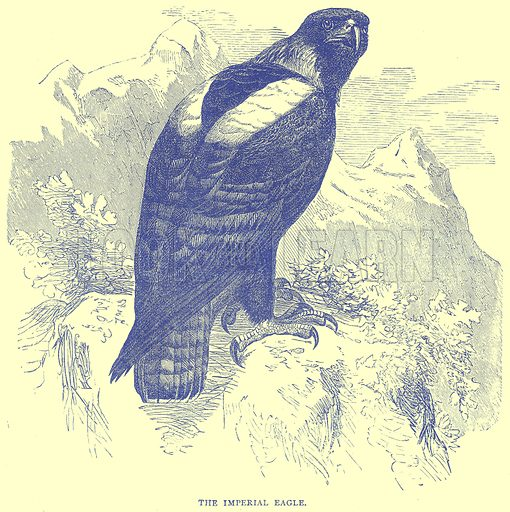 The Imperial Eagle. Illustration from Illustrated Travels edited by H W Bates (Cassell, c 1880).