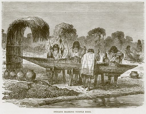 Indians Mashing Turtle Eggs. Illustration from Illustrated Travels edited by H W Bates (Cassell, c 1880).