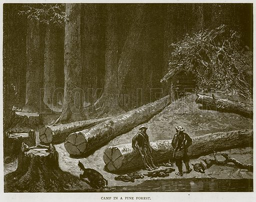 Camp in a Pine Forest. Illustration from Illustrated Travels edited by HW Bates (Cassell, c 1880).