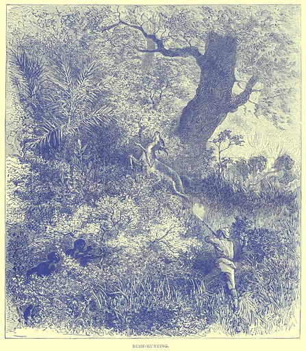 Bush-Hunting. Illustration from Illustrated Travels edited by H W Bates (Cassell, c 1880).