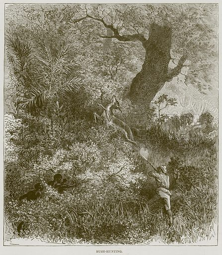 Bush-Hunting. Illustration from Illustrated Travels edited by HW Bates (Cassell, c 1880).