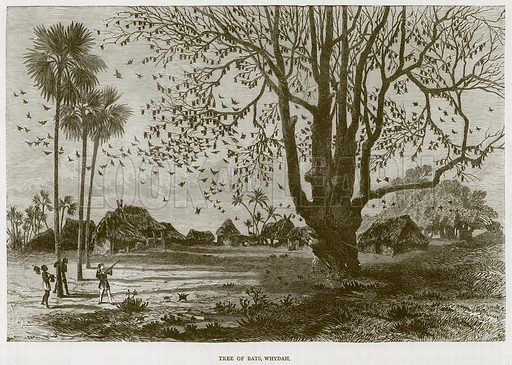 Tree of Bats, Whydah. Illustration from Illustrated Travels edited by H W Bates (Cassell, c 1880).