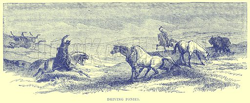 Driving Ponies. Illustration from Illustrated Travels edited by H W Bates (Cassell, c 1880).