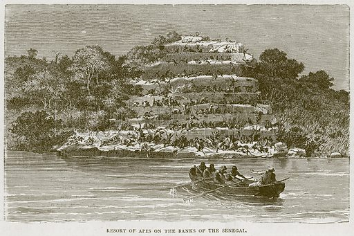 Resort of Apes on the Banks of the Senegal. Illustration from Illustrated Travels edited by H W Bates (Cassell, c 1880).