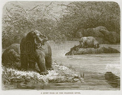 A Quiet Nook on the Chambeze River. Illustration from Illustrated Travels edited by H W Bates (Cassell, c 1880).