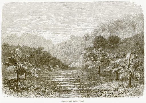 Jungle and Tree Ferns. Illustration from Illustrated Travels edited by HW Bates (Cassell, c 1880).