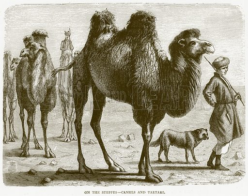 On the Steppes--Camels and Tartars. Illustration from Illustrated Travels edited by H W Bates (Cassell, c 1880).