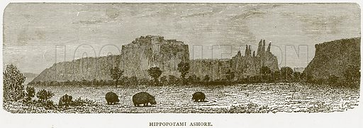 Hippopotami Ashore. Illustration from Illustrated Travels edited by H W Bates (Cassell, c 1880).