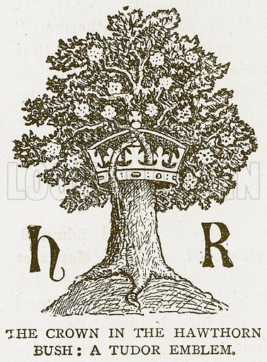 The Crown in the Hawthorn Bush: A Tudor Emblem. Illustration for History of England by HO Arnold-Forster (Cassell, 1897).