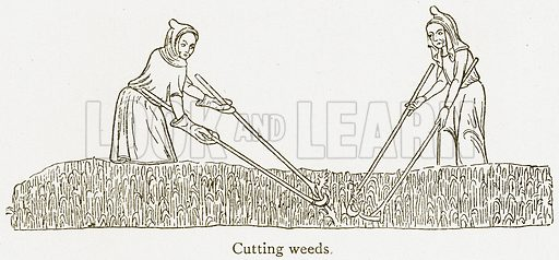Cutting Weeds. Illustration from A Student's History of England by Samuel R Gardiner (Longmans, 1902).