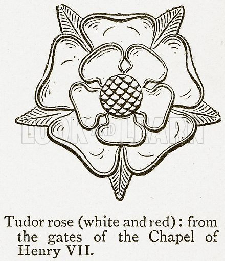 Tudor Rose (White and Red). Illustration from A Student's History of England by Samuel R Gardiner (Longmans, 1902).
