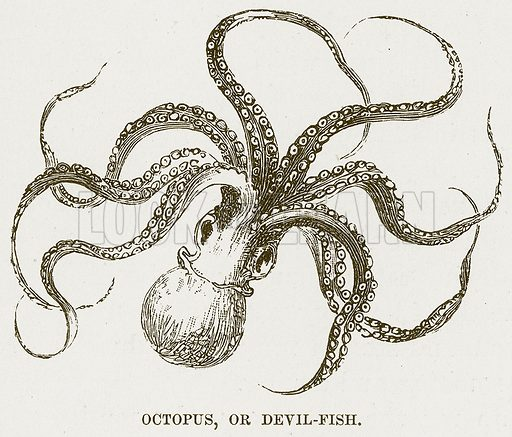Octopus, or Devil-Fish. Illustration for Boy Travellers in Australasia by Thomas Knox (Harper, 1889).