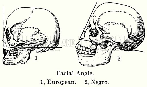 Facial Angle. 1, European. 2, Negro. Illustration for Blackie's Modern Cyclopedia (1899).