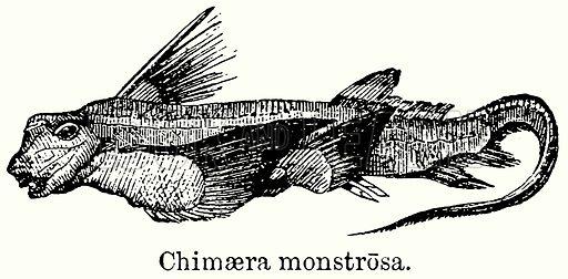 Chimaera Monstrosa. Illustration for Blackie's Modern Cyclopedia (1899).