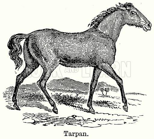Tarpan. Illustration for Blackie's Modern Cyclopedia (1899).