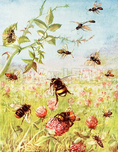 bees, picture, image, illustration