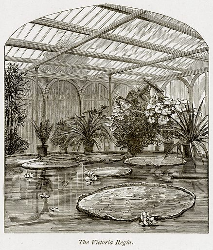 The Victoria Regia. Illustration from The Stately Homes of England by Llewellynn Jewitt and SC Hall (Virtue, 1877).