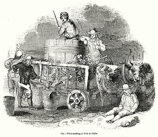 Wine-Making at Pola in Istria. Illustration for Knight's Pictorial Gallery of Arts (London Printing and Publishing, c 1860).