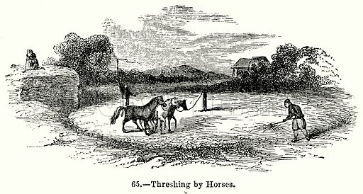 Threshing by Horses. Illustration for Knight's Pictorial Gallery of Arts (London Printing and Publishing, c 1860).
