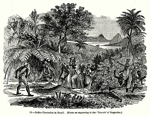Coffee-Plantation in Brazil. Illustration for Knight's Pictorial Gallery of Arts (London Printing and Publishing, c 1860).