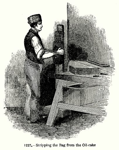 Stripping the Bag from the Oil-Cake. Illustration for Knight's Pictorial Gallery of Arts (London Printing and Publishing, c 1860).