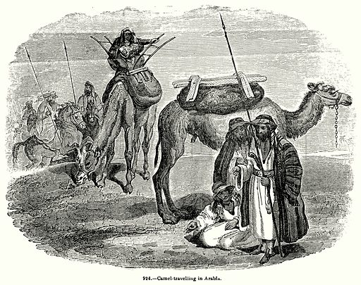 Camel-Travelling in Arabia. Illustration for Knight's Pictorial Gallery of Arts (London Printing and Publishing, c 1860).