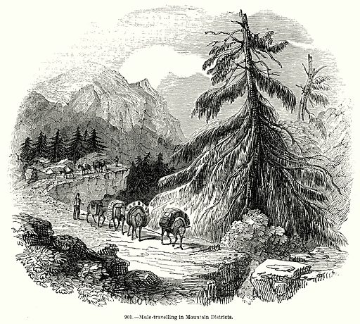 Mule-Travelling in Mountain Districts. Illustration for Knight's Pictorial Gallery of Arts (London Printing and Publishing, c 1860).