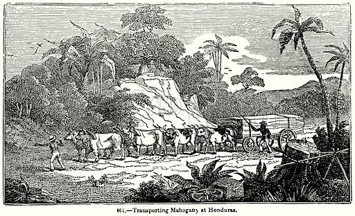 Transporting Mahogany at Honduras. Illustration for Knight's Pictorial Gallery of Arts (London Printing and Publishing, c 1860).