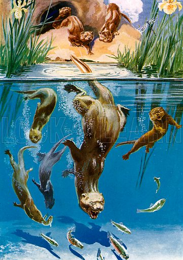 Otters, picture, image, illustration