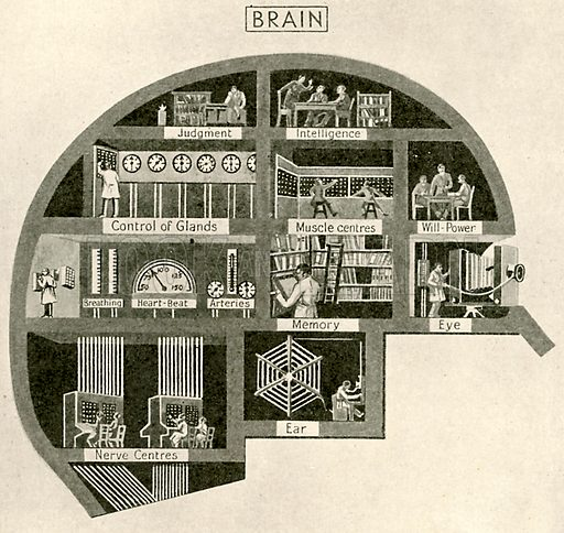 The brain, picture, image, illustration