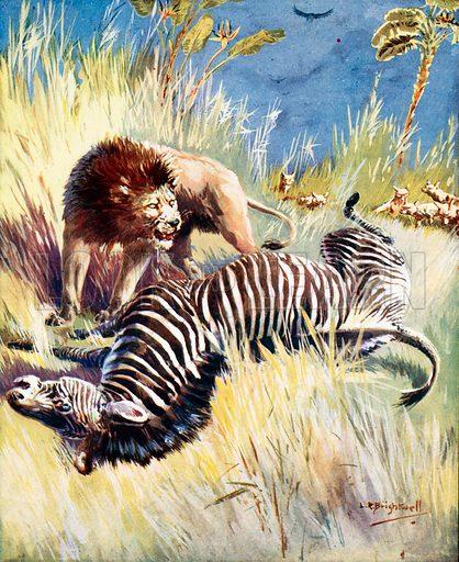 picture, L R Brightwell, painter, illustrator, artist, zebra, lion