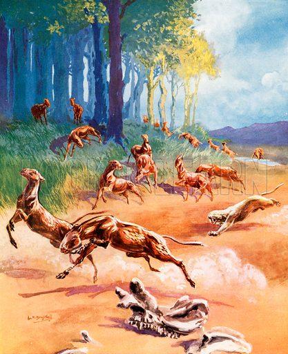 Mesohippus, picture, image, illustration